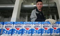 Открытие кировской молочной фермы