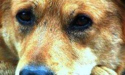 Как заработать на бродячих собаках…