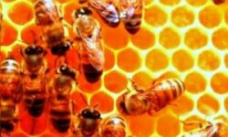 Пчеловодство – стабильный и прибыльный бизнес!