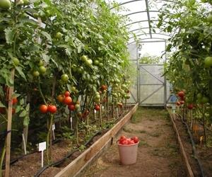 Плательщики ЕСХН - сельхозпроизводители