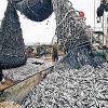 Упадок бизнеса рыбных предприятий